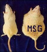 Bunyan, J., Murrell, E.A., and Shah, P.P. (1976) The induction of obesity in rodents by means of monosodium glutamate. British Journal of Nutrition 35: 25-39.